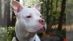 Cão roubado salta de alegria ao reencontrar sua dona após dois anos desaparecido (vídeo)