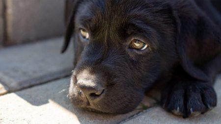 Mulher lacra boca de cachorro e diz que é 'piada' mas juiz não acha graça nenhuma