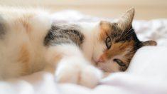 Gato predice muerte de pacientes en hospital, se acerca cuando están a horas de fallecer