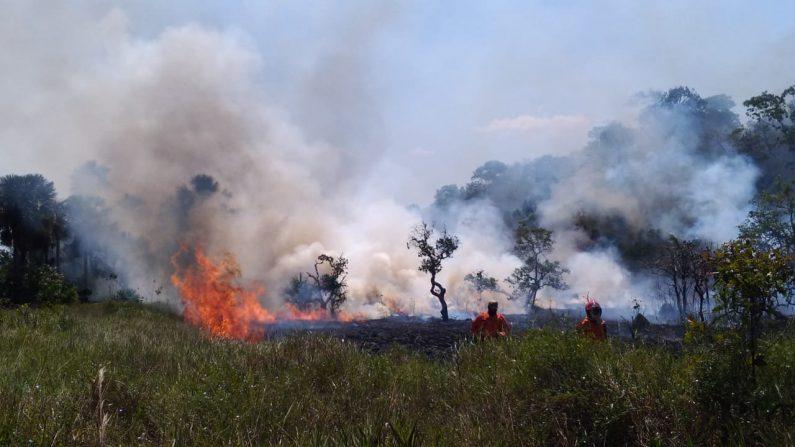 Incendio en Alter do Chão el 15 de septiembre de 2019. (Bragada de Bomberos Militar de Para)