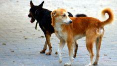 México es declarado como el primer país libre de rabia en humanos transmitida por perros