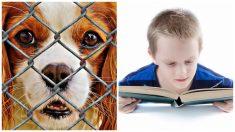 Niños leen cuentos a perritos de refugio para combatir su miedo y ansiedad de estar encerrados