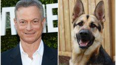 Gary Sinise recauda fondos en el Día de los Veteranos para perros que luchan junto a soldados