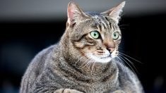 """Gatito gordo excede el peso para subir al avión y su dueño consigue un """"doble"""" para hacerlo viajar"""