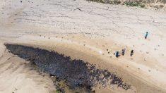 Policía de Brasil sospecha que el crudo venezolano vertido en sus playas lo trasladó un buque griego