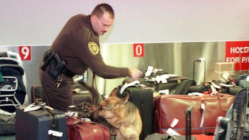 El oficial de policía del Aeropuerto y un Pastor Alemán revisan el equipaje en el Aeropuerto Metropolitano de Detroit en Romulus, Michigan, el 22 de diciembre de 1999. Las medidas de seguridad en Michigan, que limita con Canadá, se han incrementado en los cruces fronterizos y aeropuertos, (AFP Photo / Jeff Kowalsky/ AFP a través de Getty Images)
