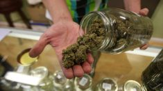 La relación entre la marihuana y la psicosis