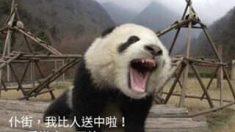 Partidarios de Hong Kong hablan sobre pandas en el Día de Acción de Gracias, y China intensifica sus amenazas