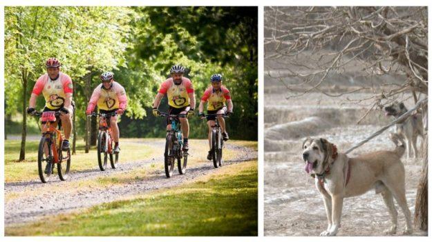Ciclistas resgatam cachorro esquelético amarrado em árvore e cruelmente abandonado na floresta