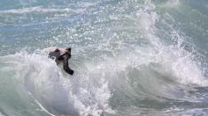 Diminuta perrita sobrevive mar adentro antes de ser rescatada, pensaban que no la verían nunca más