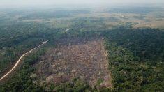 Área desmatada na Amazônia só foi maior durante o governo Lula