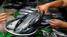 La FDA emite una alerta por un nuevo un brote de enfermedad por consumo de atún en descomposición