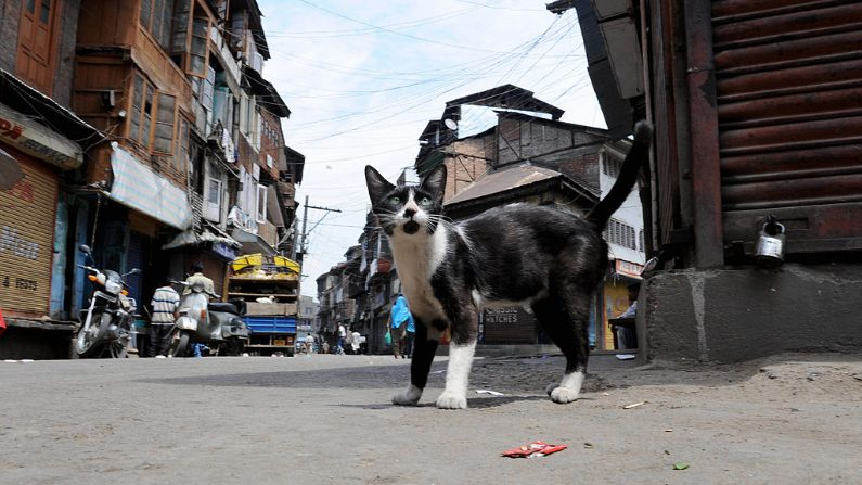 Imagen ilustrativa de un gato en la vía pública. (ROUF BHAT/AFP via Getty Images)