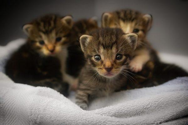 gatitos, cautivados