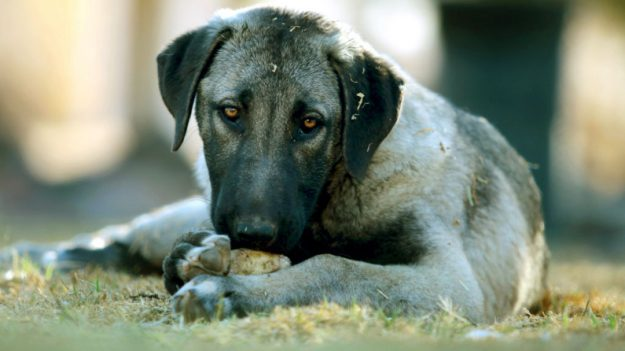 Captan a un perro pintado de verde llorando y buscando comida, las imágenes conmocionan a las redes