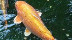 """Misterioso pez con """"cara humana"""" crea controversia y especulación en redes sociales"""