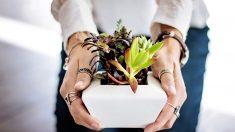Plantas de interior que absorben toxinas