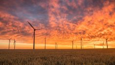 Elecnor investe 73 milhões de euros para financiar parques eólicos no Brasil
