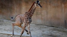Incendio en granero mata a 10 animales en zoológico de Ohio