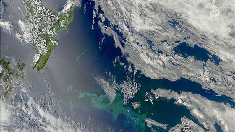 Aguas de las aguas de las islas Chatham de Nueva Zelanda donde se extiende una gran mancha de agua caliente. ( Imagen de NASA Earth Observatory-imagen de dominio público /Wikimedia)