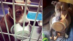 Cão de abrigo, loucamente apaixonado por sua tigela de comida, se recusa a ser adotado sem ela