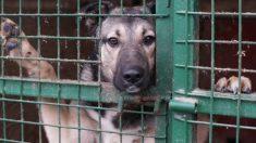 Cadela preocupada foge do canil só para confortar dois filhotes de cachorro que choravam assustados