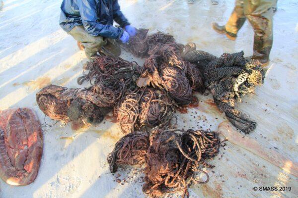 Se encontraron desechos tales como: vasos de plástico, cuerdas, redes de pesca, bolsas y correas de embalaje en el estómago de un cachalote varado
