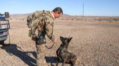 Agente fronterizo y su perra K-9 se convierten en super rastreadores en el desierto de Arizona