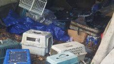 Homem do gás levanta lona em casa abandonada e salva nove gatos enjaulados em cinco caixas