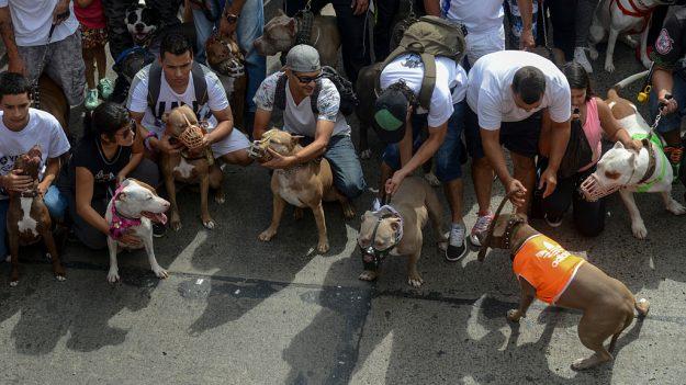 Cuatro hombres procesados en Nueva York por organizar peleas de perros