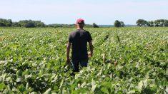 Grassley habla sobre proyecto de ley de salud mental rural mientras aumentan suicidios de granjeros