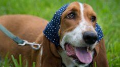 Buscan con ley sacar a perros y otras mascotas de restaurantes de Florida
