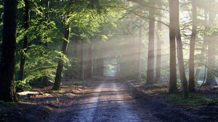 Descubren el bosque fosilizado más antiguo del mundo en Nueva York