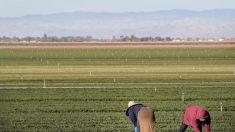 Cámara aprueba proyecto de ley que da amnistía a algunos trabajadores agrícolas inmigrantes ilegales