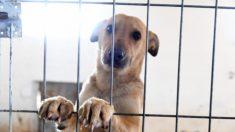 Foto comovente do único cachorro que restou no abrigo torna-se viral e emociona o público