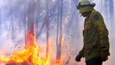 Caçador de 22 anos resgata nove coalas de incêndios florestais em Mallacoota na Austrália