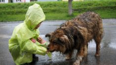 Garoto que usou dinheiro do bolso para alimentar cães famintos, abre abrigo de animais aos nove anos