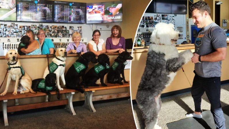 """Foto cortesía de Fido's. """"El primer bar del mundo en el que puedes acariciar perros""""."""