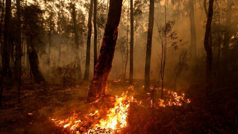 El 5 de enero de 2020 todavía se producen  incendios puntuales entre Orbost y el río Cann en la autopista Princes Highway, Australia (Darrian Traynor/Getty Images)