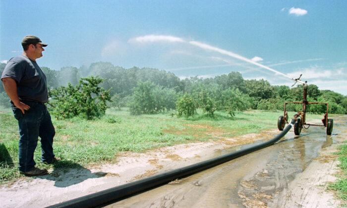 John Rigolizzo, un agricultor de la tercera generación de la Granja 5R en Berlín, Nueva Jersey, observa un rociador de riego trabajando en el huerto de melocotones de la granja el 3 de agosto de 1999. (TOM MIHALEK/AFP vía Getty Images)
