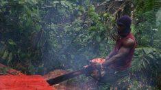 Activistas y expertos están preocupados por las operaciones de deforestación de China en África