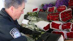 CBP inspecciona más de 1000 millones de flores importadas por San Valentín