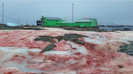 La explicación detrás del extraño tono rojizo que ha cubierto ciertas zonas de la Antártica
