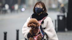 Estudiante de escuela en EE.UU. en cuarentena en Wuhan recauda 30.000 dólares para coronavirus