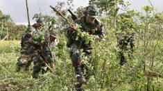 Bolivia inicia la erradicación de 8525 hectáreas de cultivos de coca ilegal
