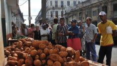 Distribución de papa llegará a toda Cuba pero con disparidades provinciales