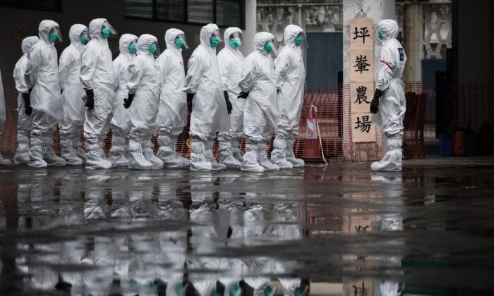 Voluntarios del Servicio de Ayuda Civil con ropa protectora participan en una demostración de sacrificio de pollos como parte de un ejercicio de respuesta de emergencia en Hong Kong el 21 de mayo de 2017. (Dale de la Rey/AFP vía Getty Images)