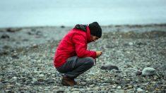 """El mosquito europeo invade la Antártida: """"Un peligro potencial para el ecosistema"""""""