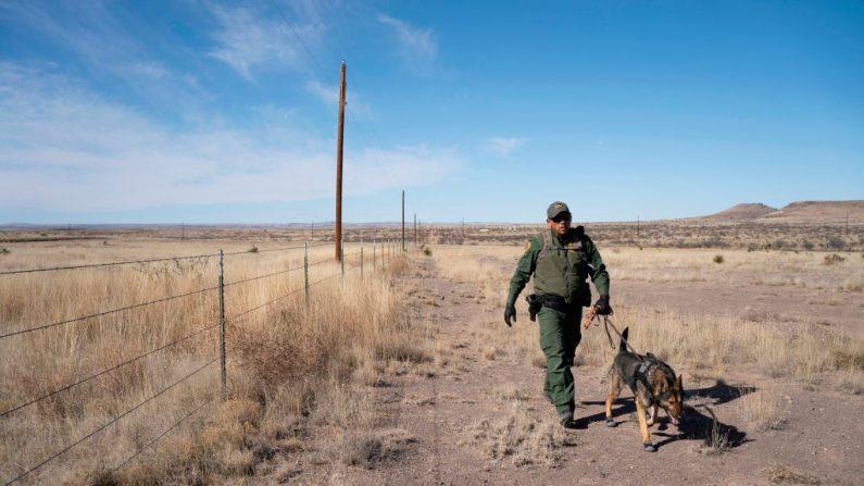 El agente de manejo de caninos, pasea a Max, un belga de Malinois, mientras persigue a los sospechosos cerca de Marfa, Texas, el 29 de enero de 2020. (PAUL RATJE/AFP vía Getty Images)