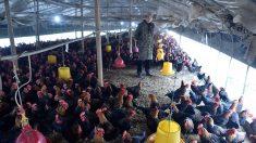 Virus del PCCh devastó la industria avícola de China